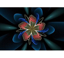 Flower of the Night Photographic Print