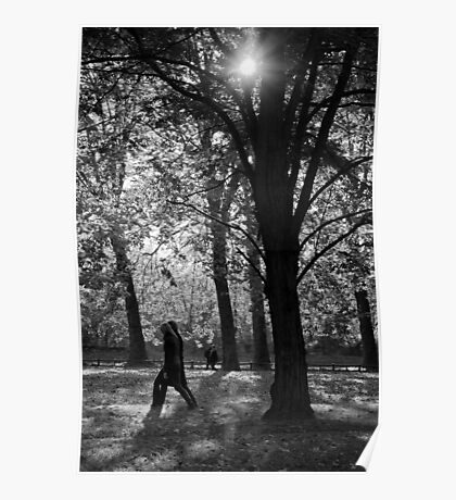 Dark trees Poster