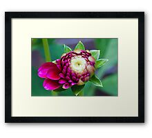Trying to Open Framed Print