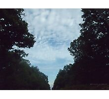 Sky through forest Photographic Print