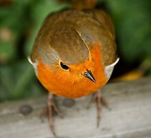 Red Robin by moor2sea