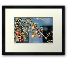 Not Eva fruit! Framed Print