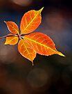 Autumn Leaves by Darren Burroughs