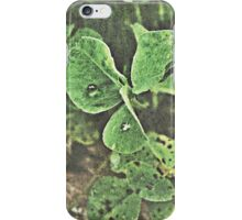 Dew Drops on Clover iPhone Case iPhone Case/Skin