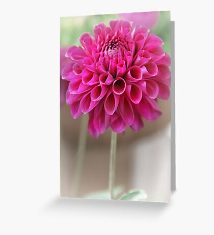 Softly my little Dahlia Greeting Card