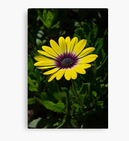 Strong and alone Canvas Print