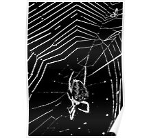 Spider, Web and Fly Poster