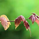 The First Signs of Fall by Jeff Ore