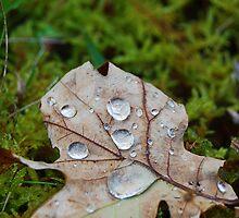 Rain drops on leaf/Diferyn glaw ar ddeilen derw by blodauhyfryd