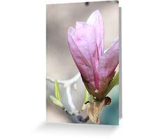 Japanese Magnolia Blooming   Greeting Card