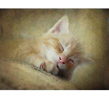 Soft Kitty, Warm Kitty, Little Ball of Fur Photographic Print