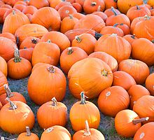Lots of Pumpkins by Malania