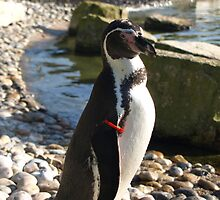 Penguin2 by Avent101