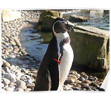 Penguin2 Poster