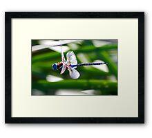 101711 Dragonfly  Framed Print