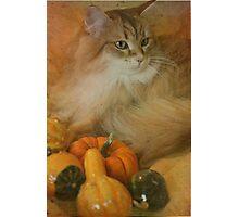 Harvest kitty 1 of 2 Photographic Print