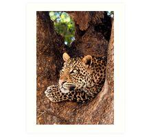 Leopard, Mashatu, Botswana Art Print