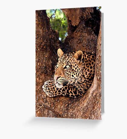 Leopard, Mashatu, Botswana Greeting Card
