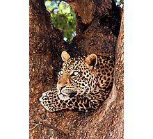Leopard, Mashatu, Botswana Photographic Print