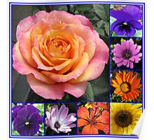 Flowers of Summer Collage featuring Radiant Rose Beauty Poster