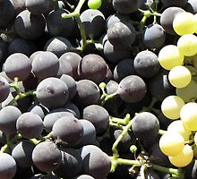 The Grapes are Ready to Eat by branko stanic