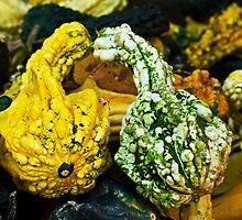Kissing gourds by Thad Zajdowicz