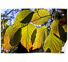 Backlit Fall Poster