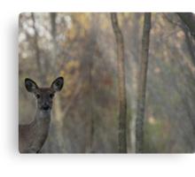 Deer is Proud of his Forest Metal Print