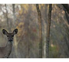 Deer is Proud of his Forest Photographic Print