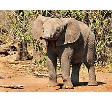 Elephant, Mashatu, Botswana Photographic Print