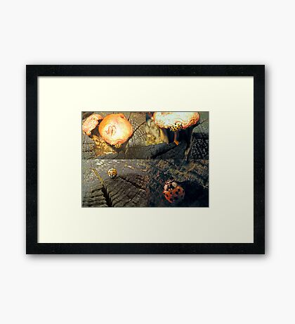 The Ladybug that Wandered Framed Print