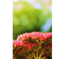 Pink summer flower petals in green background Photographic Print