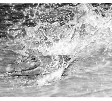 Gator Splash by Ronny Hart