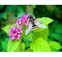 Colorful Wings Photographic Print