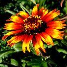 Orange glow by Sue Hays
