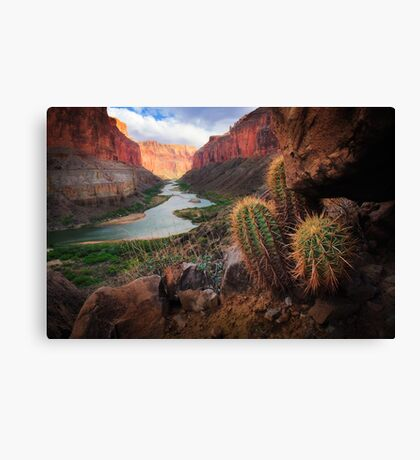 Marble Canyon Cactus Canvas Print