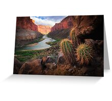 Marble Canyon Cactus Greeting Card
