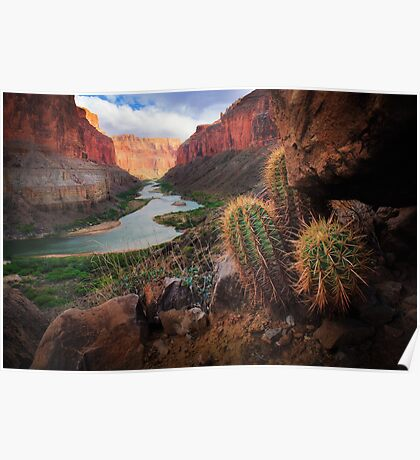 Marble Canyon Cactus Poster