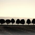 Lancaster Tree Line by Kelly Chiara