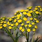Beauty In Yellow by Michael  Moss