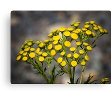 Beauty In Yellow Canvas Print