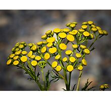 Beauty In Yellow Photographic Print