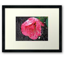 Governor General's rose 2 Framed Print