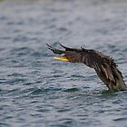 Double-Crested Cormorant Wing Flap - Ottawa, Ontario by Stephen Stephen