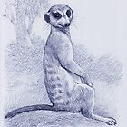 Meerkat by thedrawinghands
