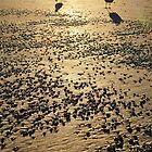 Revere Beach by Sara Bawtinheimer