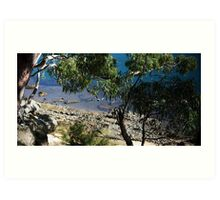 Gore Cove, Sydney Harbour Art Print