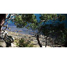 Gore Cove, Sydney Harbour Photographic Print