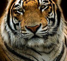 Anybody Read Jungle Book Lately????? by TeresaB