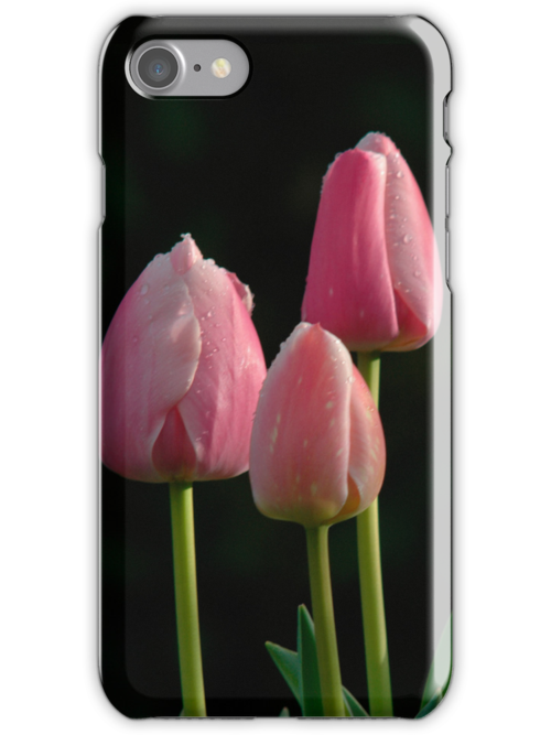 Pink Tulips- iPhone case by teresalynwillis